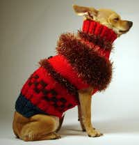 Stylish and sophisticated describes the wool and acrylic Jazz Moderno 2 from La Bamba dog sweaters. Starting at $120 through Jan. 2; labambadogsweaters.com.