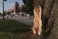 A damage tree along Nolan Ryan Expy after a summer storm passed through Arlington July 06, 2010.