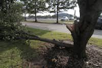 :A damage tree along Nolan Ryan Expy after a summer storm passed through Arlington July 06, 2010.