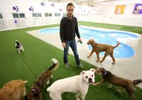 Justin Cook, a manager at Paradise 4 Paws, accompanies guests to a bone-shaped wading pool. The pet resort on the east side of the airport has accommodations for $49 to $100 a night.
