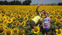Laurie and Libby Skaggs from Tulsa, Okla., posed for pictures in a field of sunflowers in Allen on Thursday. Mother Nature's bright sunlight meant a flash wasn't needed.