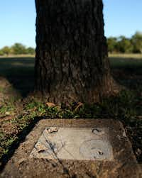 A plaque removed from its base rests next to an old pecan tree in Kiest Park in Dallas on Thursday.