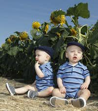 Twins Cooper Stout and Miles Stout, 1, pose for their mother on the edge of a sunflower field located near Exchange Parkway in Allen.