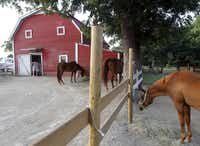 """Over the last 57 years, Merriwood Ranch has thrived as a place for horseback riding and summer camps. Now, its backers plan to testify at Garland city meetings on the property's future. """"We've had more than 160 emails the last few days,"""" Planning Director Anita Russelmann said."""