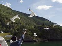 Feeding the seabirds as we cruise the Sognefjord, Norway.