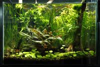Michael Parkey's 20-gallon aquarium, his first try at a planted tank.