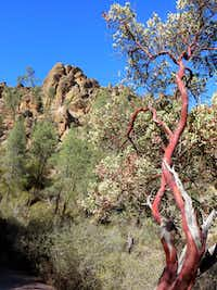 At Pinnacles National Park, which is east of California's Salinas Valley in the Gabilan Mountains, the landscape changes at every turn and with every season. Colors range from muted to brilliant.