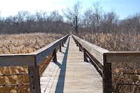 """Voters' Choice selection: """"Walk the Line,"""" by Belinda Reid.(Belinda Reid)"""