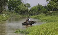 Indian forest officials atop an elephant cross a stream during the March 2013 rhino census at the Kaziranga National Park in Assam state, India.