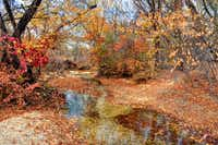 """Hidden Creek"" by Peter Roos displays fall foliage at Arbor Hills Nature Preserve.(Peter Roos)"