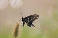 "Voters' Choice selection: Collin Schroeder's photo of a butterfly on ""an outrageously hot Texas day.""(Collin Schroeder)"