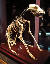 The skeleton of a sailor's best friend are among the remains on display at the Mary Rose Museum in Portsmouth, England. The Mary Rose Museum in Portsmouth's Historic Dockyard is home to the 16th century warship, and some of the 19,000 artifacts that sank with her on 19 July, 1545.