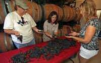 Lisa Kocsis (center) showed Lee Hill of Melissa and Kristine Edens of Dallas how to sort grapes at the vineyard.