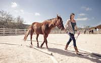 An equestrian program is among offerings at Travaasa, one of the newer Hill Country spa resorts.