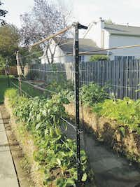 Using T-posts and wire to support climbing plants such as tomatoes or cucumbers makes a straw bale garden more productive, says Joel Karsten, author of Straw Bale Gardens Complete.( Jen Daugherty )