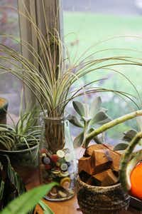 Plants bring life, color to dormant indoor spaces | DIY | Dallas News