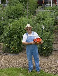 Retired extension agent Bill Adams participated in Houston tomato trials for years, providing the deep knowledge about raising tomatoes in Texas. Today he gardens in Burton, in Central Texas.