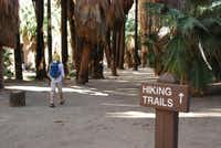 The Indian Canyons, owned by the Agua Caliente Indian Band and within Palm Springs? city limits, is the site of North America's largest natural fan palm oasis. Ancestors of today's Agua Caliente Band ate the fruit of the fan palm and wove its fronds.