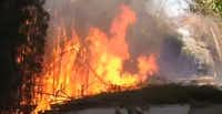 A section of the Katy Trail caught fire Tuesday afternoon. (KXAS-TV NBC5)