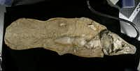 This is a fiberglass cast of a coelacanth fossil.
