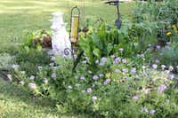 """The verbena in the foreground isn't edible, but """"I haven't had the heart to take it out,"""" says Arlene Hamilton."""