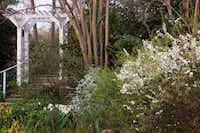 The restored Upper Garden features spireas, snowflakes and  'Avalanche' daffodils that survive from Chestina Welty's day.