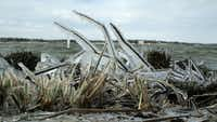 Ice coats vegetation along the White Rock Lake shoreline after severe winter storms hit Dallas in February 2011.