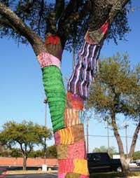 A yarn-bombed tree outside the Woolie Ewe yarn shop in Plano. The yarn shop's customers organized the yarn bombing.