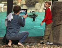 Mark Wedgeworth, 6, posed with penguins for his grandmother Susie Gaither of Garland at the Dallas Zoo on Wednesday.